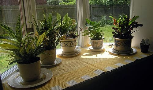 Interesting article on how indoor plants can affect your space